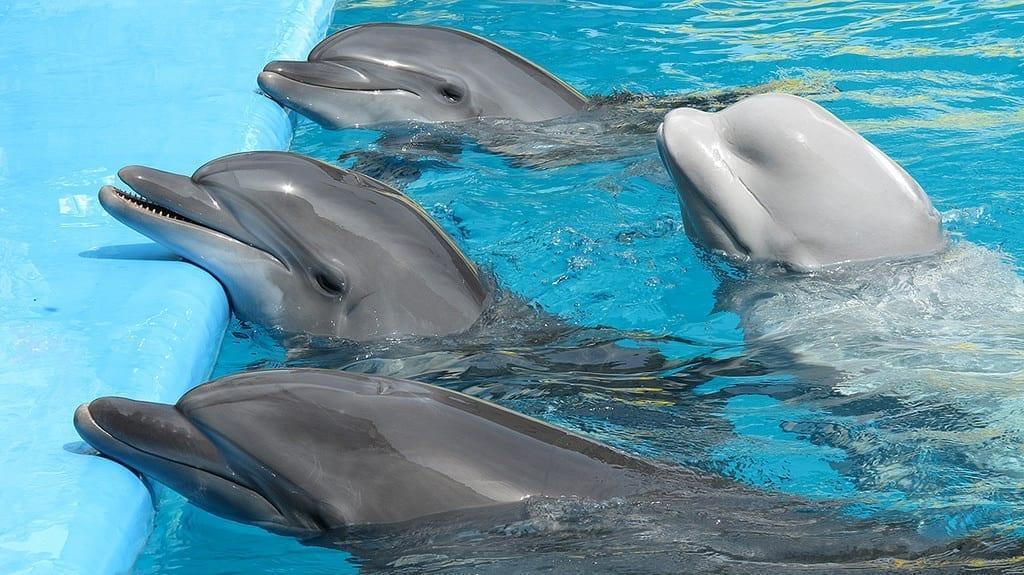Дельфинарий Троя