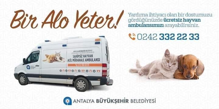 Служба помощи бездомным животным