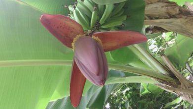 Photo of Бананы