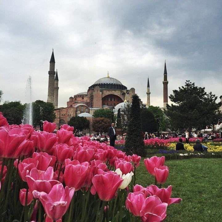 Турция тюльпаны