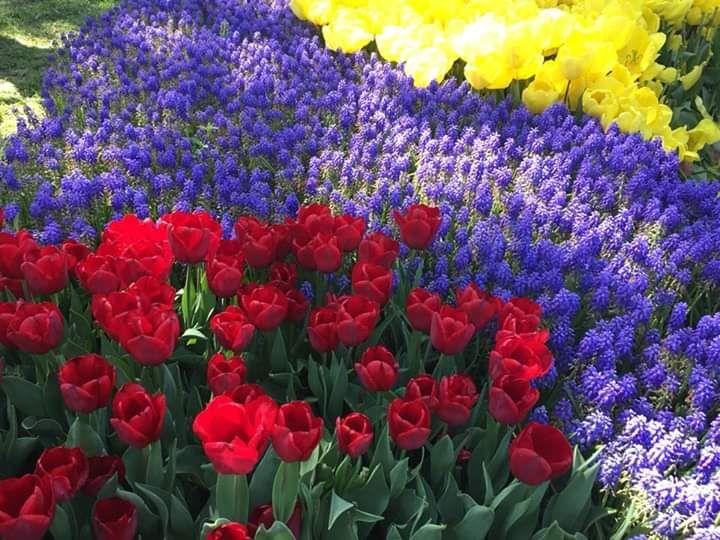 Тюльпаны Турция