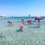 Чешме фламинго