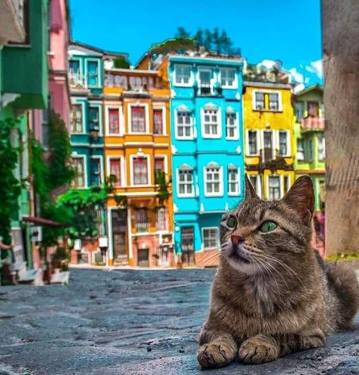 Балат район Стамбула